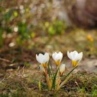 spring II by Wilithin