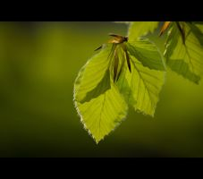 Green Leaves ll by mARTinimal
