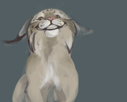 lynx smile by iktis