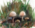 Mushrooms three by High-fiven-Zombie