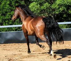 Andalusian stock 46 (behind shot) by xxMysteryStockxx