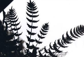 Ferns by mariapiva