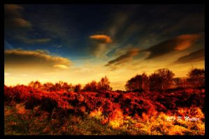red heather by theoden06