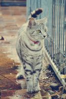 catwalk. by Shutter-Shooter