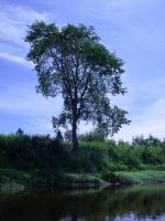tree by the river 2 by LucieG-Stock