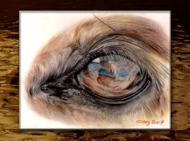 Eye of a HORSE by cmg2901