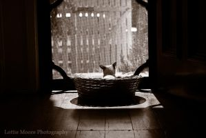 Pern by catlover