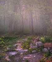 Meadow Path Background 2 by little-spacey