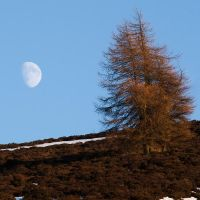 Mid-morning Moon over Sidlaws by Greg-McKinnon