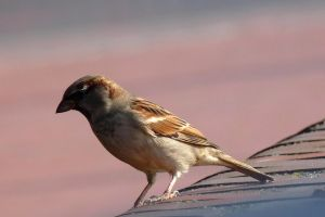 sparrow in the sun by Dieffi