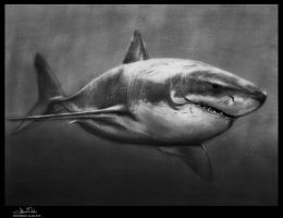 Carcharodon carcharias by Art-by-Jilani
