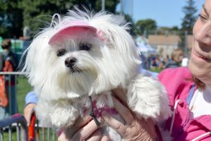 2014 Dog Festival, Up Close In Your Face by Miss-Tbones