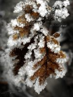 Winter leaf by sp-andreea