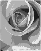 Black and White Rose by AmedaN