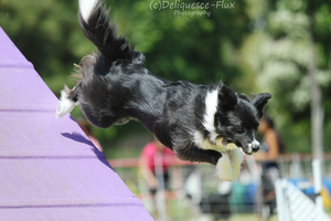 AKC Agility Trial 5 by Deliquesce-Flux