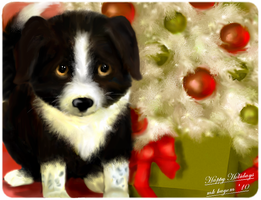 A Christmas Puppy by mk-kayem
