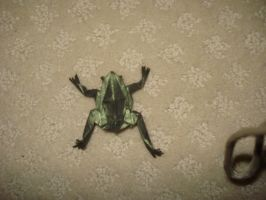 Origami Tree Frog by xhudaman