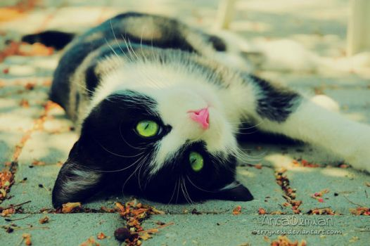 Cattiness by Sophibelle