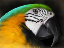 Macaw Painting by Angelic-Bear