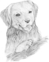 Dog in pencil by viki-vaki