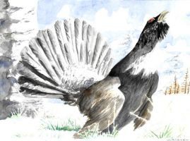 Common capercaillie by emalterre