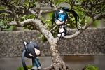 prelude to cat stuck in tree by Naxhis