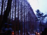 Nami Island by Thedollyjolly