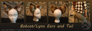 Bobcat/Lynx ears and tail- commission by NightTwilightWolf