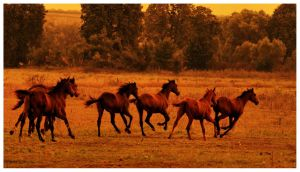 Horses tracken's by Lilia73