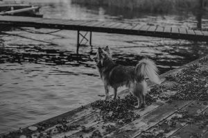 Little dog by Martinoice