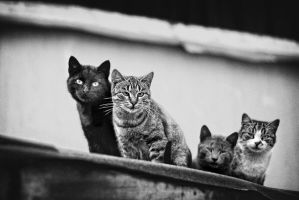 The4cats by Vlad-Off-kru