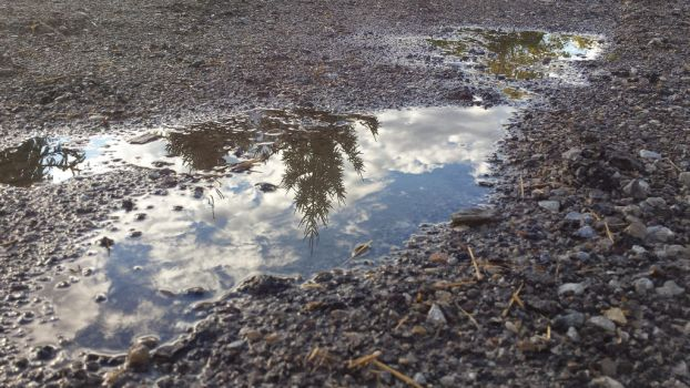 Mid Day Puddle by rosebai21