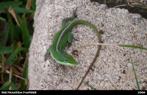 Lizard on a Rocky Surface 01 by phantompanther