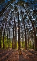 Trees by mrk