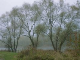 Gloomy afternoon I by starykocur