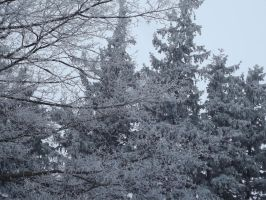 Frosted Trees by SirGunky