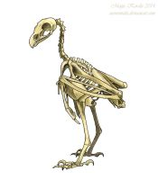 Modern Raptor Skeleton by Eurwentala