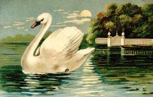Swan in the Park by Yesterdays-Paper