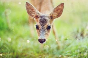 Curious Baby Roe by RoeEbo