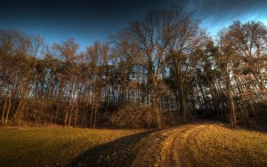 Into the forest by myINQI