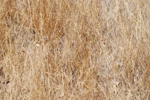 Dry Grass Texture-Stock by Thorvold-Stock