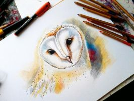 Barn -owl by bemain