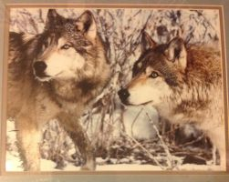 Wolves by DrCrazyWolf