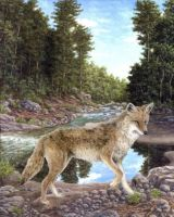 Coyote by the River by Choedan-Kal