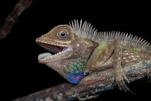 Bell's Anglehead Lizard by orionmystery