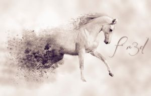 White Horse by Fr3D52