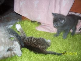 My kittens playing: video link by Katy500