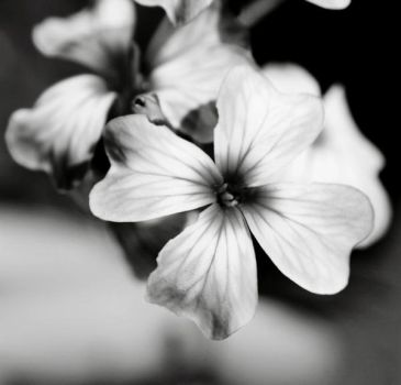 Flower Close-up by td-photography