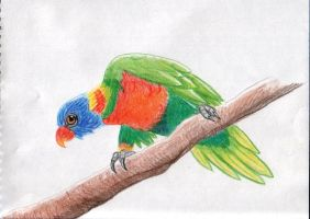 parrot by rayvendawn