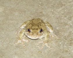 Frog on Porch. by Kaibutsu